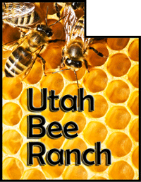 Free bee removal utah utah bee swarm removal utah bee ranch do not attempt to remove the bees yourself solutioingenieria Images